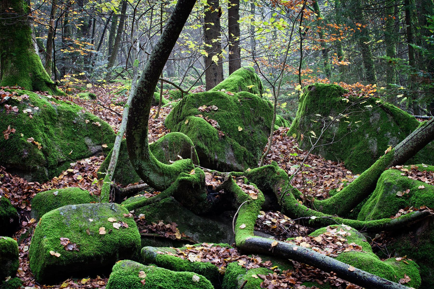 Naturschutzgebiet Höllbachtal bei Rettenbach
